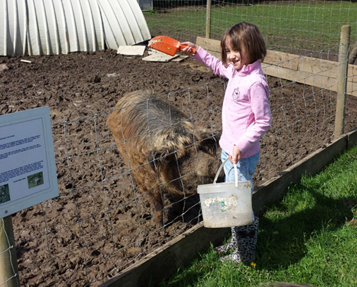 Feeding and cleaning the animals
